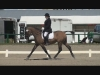 Sandman Dressage