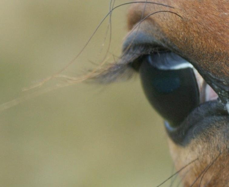 caesar-eye