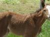 foal-3